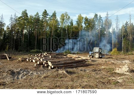 Sanitary felling of trees infected by eight-toothed bark beetle (Ips typographus).