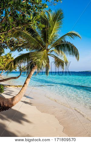 Sandy beach in the Maldives on a sunny day