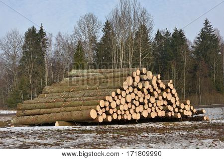 Pile of logs on meadow in forest North Lithuania