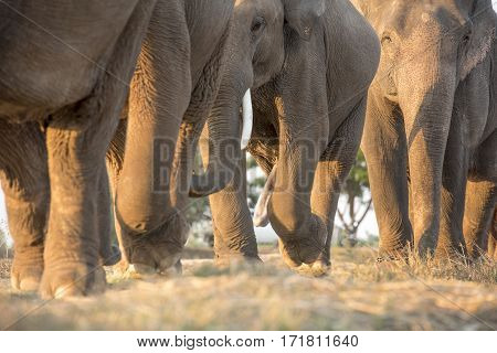 The family of elephant walk in the forest
