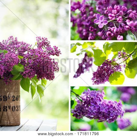 Close up of lilac arrangement