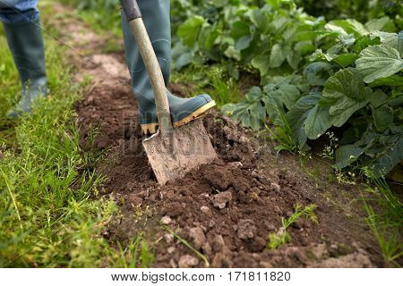 farming, gardening, agriculture and people concept - farmer with shovel digging garden bed or farm