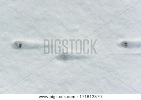 Background of animal traces in fresh snow