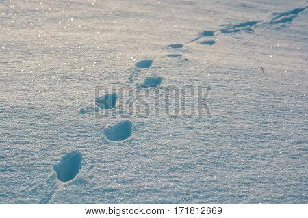Vivid background of footprints in fresh snow