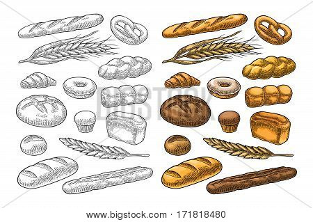 Set bread. Isolated on the white background. Vector color hand drawn vintage engraving illustration for poster label and menu bakery shop.