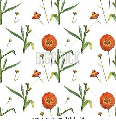 Red daisy on white background. Seamless watercolor pattern. Could be used for textile or in design