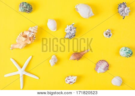 beautiful collection of seashell on colorful background Sea flat lay tropical and aloha concept.