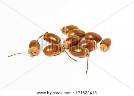 Dried acorns on a white background. Autumn theme. A pile of acorns close up.