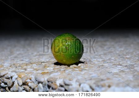 Wet lemonsito (kalamansi) is lying on an artificial stone surface, Panglao, Philippines