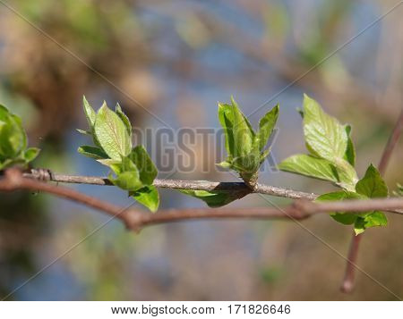 New tender shoots of spring are appearing on plant stems in the Metroplex.