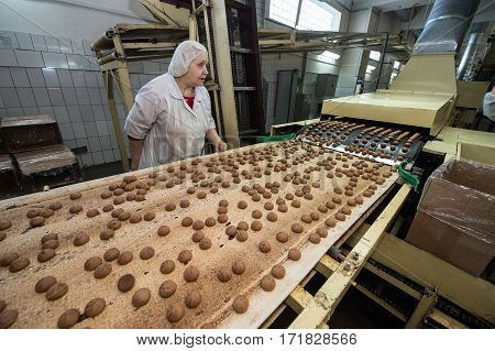 Many Sweet Cake Food Factory Massive Production