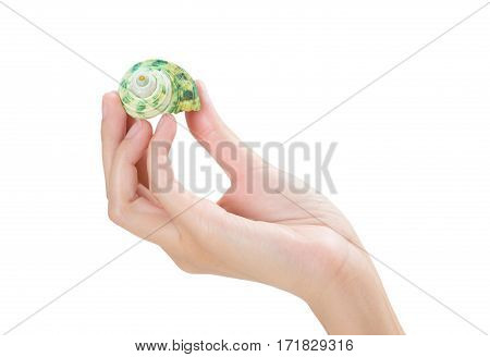 woman hand holding beautiful mollusc shells isolated on white background