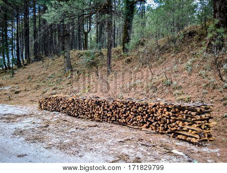 Wood Pile Along The Road