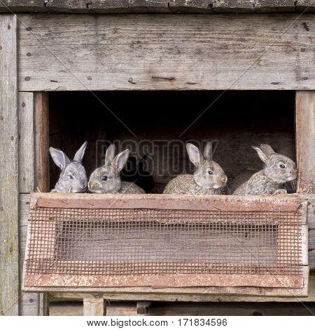 grey brown newborn bunnies in old cage