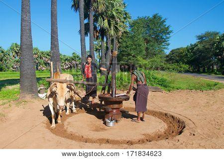 Bagan, Myanmar - October 2015: Laborers grinding palm sugar by a manual method