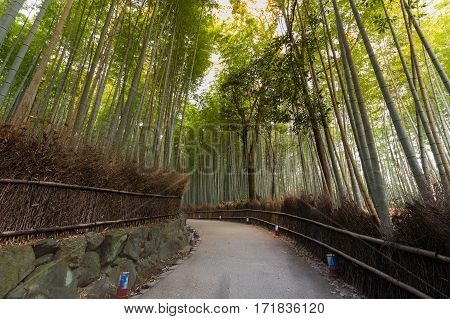 Bamboo Forest with walking way on arashiyama Kyoto Japan. Green bamboo fence background texture