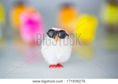 Funny colorful chicks, postcard, greeting card, decoration