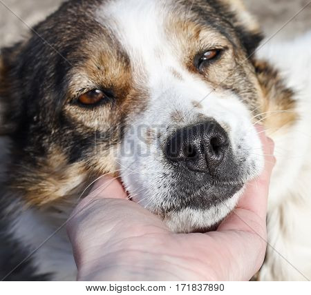 sweetheart muzzle dog loyally lying on the palm of a person