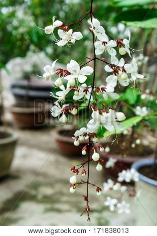 white little flowers hang from the branches.
