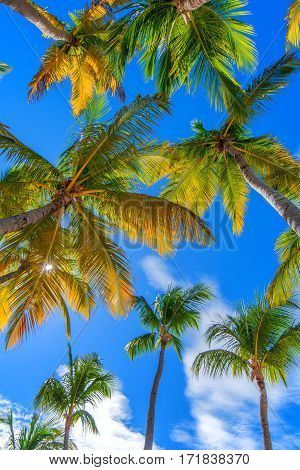 Vertical image of paradise tropical beach with palm trees on blue sky background