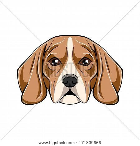 Vector Illustration Portrait of Beagle Puppy. Dog isolated on white background
