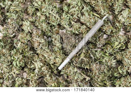 Spliff - cannabis joint on dry cannabis buds background