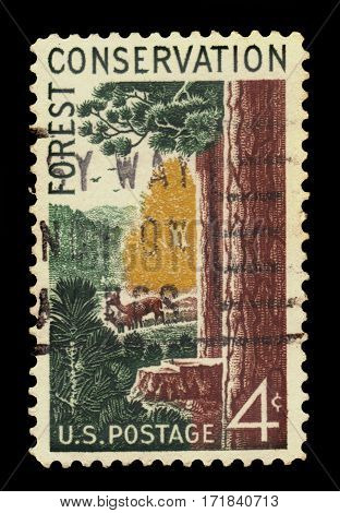 USA - circa 1958: A stamp printed in United States of America shows forest scene with giant sequoia and deers, series forest conservation, circa 1958
