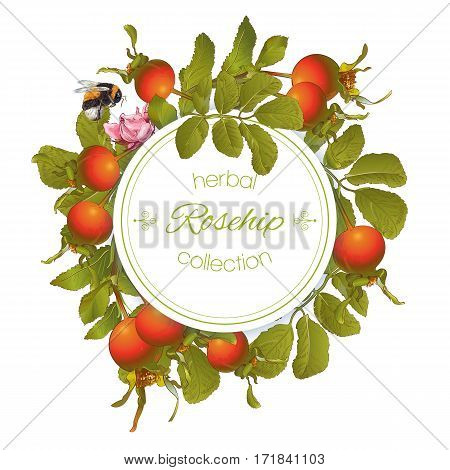 Vector rose hip round banner on white background. Design for tea, homeopathy, herbal cosmetics, health care products. With place for text