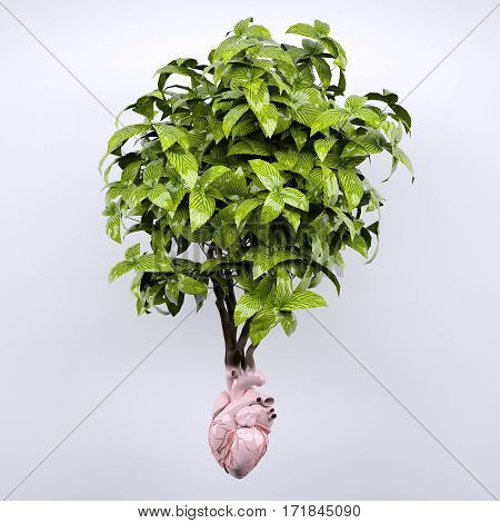 Plant And Heart Organ As Roots