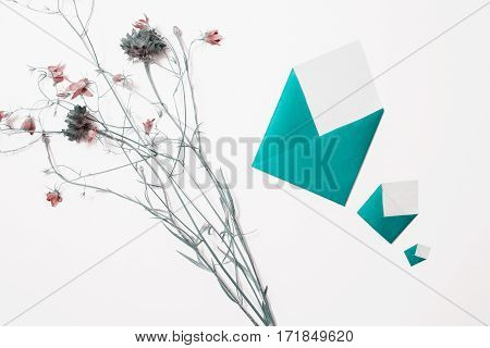 Wildflowers. Blue knapweed small envelopes lie on white background. Three letters. Write a letter. Greeting card. Copyspace flat lay top view.