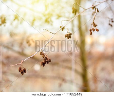 Multiple buds on a tree branch with defocused background