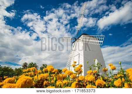 Windmills And Fields Of Marigolds