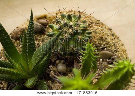 An assortment of succulent plants in a glass terrarium.