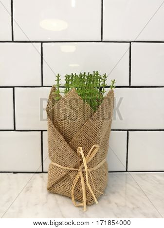 Little plant for home and office garden on table for decorating restaurant table with white block wall and lighting refection background