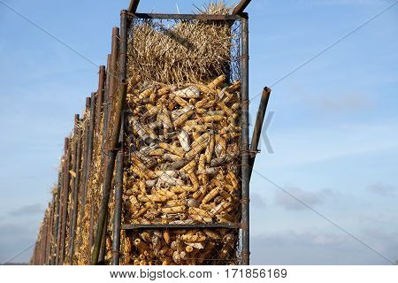 Pile of corn in the Beauce, France
