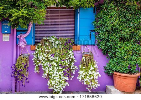 Hidden picturesque window blue shutters and flowers on magenta wall of houses on the famous island Burano, Venice, Italy