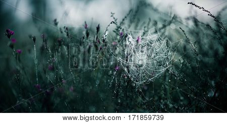 cobweb in grass with drops in blue toning