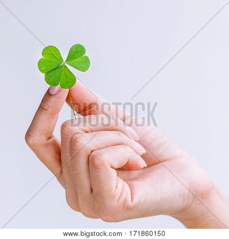 The Girl Holding Clovers Leaves On White Background. The Symbolic Of Clover The First Is For Faith,