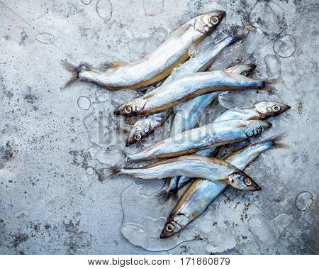 Fresh Catch Shishamo Fish Fully Eggs Flat Lay On Shabby Metal Background. Shishamo Fish Is Popular F