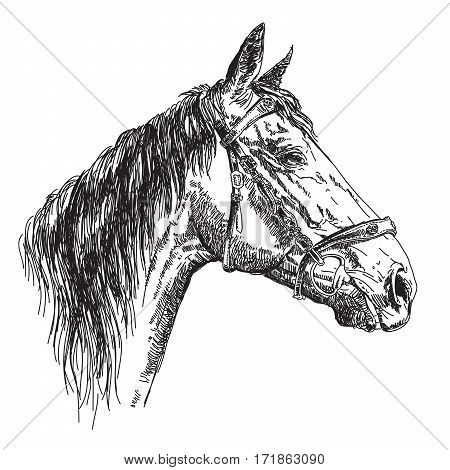 Horse head in profil with bridle in black and white vector hand drawing illustration
