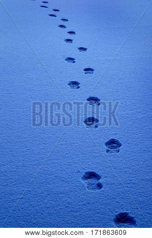 Path for Progress with footprints in the snow