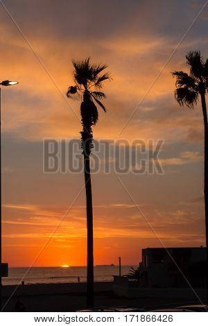Sun setting into the ocean with silhouetted palm tree