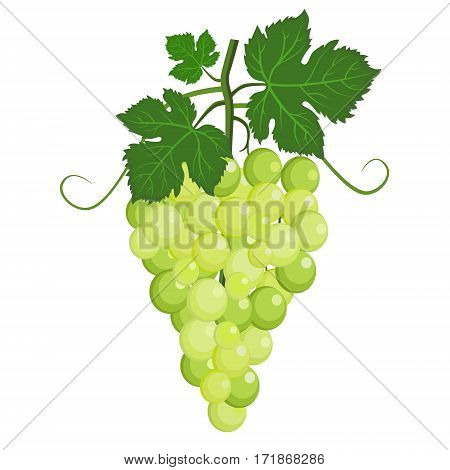 cluster of grape with green leaves vector illustration