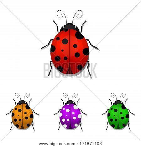 Set of colorful ladybugs isolated on white background. Vector illustration