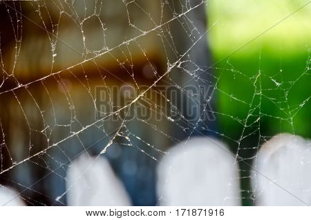 Outdoor Spider's Web In The Sun, Close Up