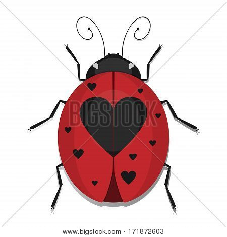 Ladybug beetles with heart spotted wing vector ladybird ikon isolated on white background.