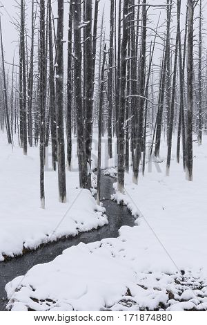 Monochrome of Stream in Snow Covered Forest
