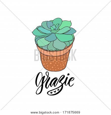 Succulent in the pot with text - Grazie thank you in Italian. Home decoration print. Vector illustration