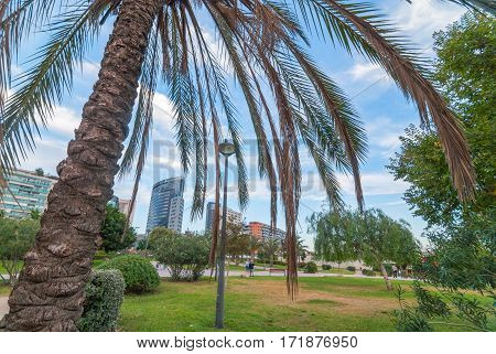 Bird sits atop a lamp post in Valencia urban park. Palm tree foreground, in front of city-scape.  People take afternoon walk on autumn day.  Skyline view from city park beside Arts & sciences museum.
