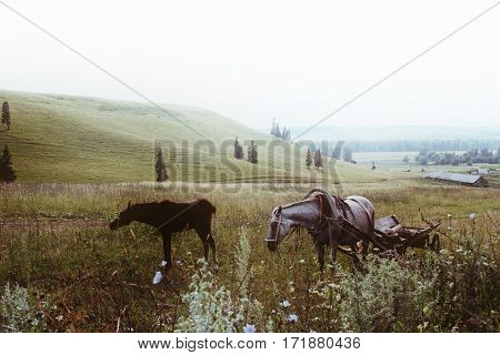 Horse And Cart With A Foal In A Field